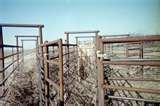 Cattle Steel Fencing Panels images