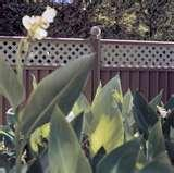 Steel Fencing New York pictures