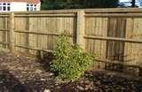 pictures of Steel Fencing Pets