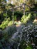 Steel Fences Gardens pictures