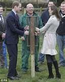 Steel Fencing Northern Ireland pictures