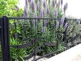 Steel Fences For Gardens