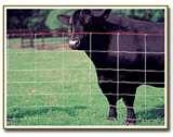 photos of Steel Fencing Cost Per Foot