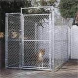 Steel Fence Dog Pictures