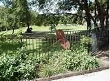 Images of Steel Fence Horse