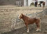 Pictures of Steel Fence Horse