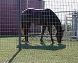 Steel Fence Horse Images