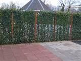 Steel Fence Ivy Photos